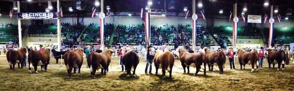 nwss bull