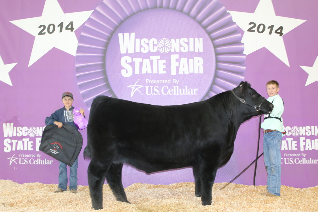 Champion Angus Steer