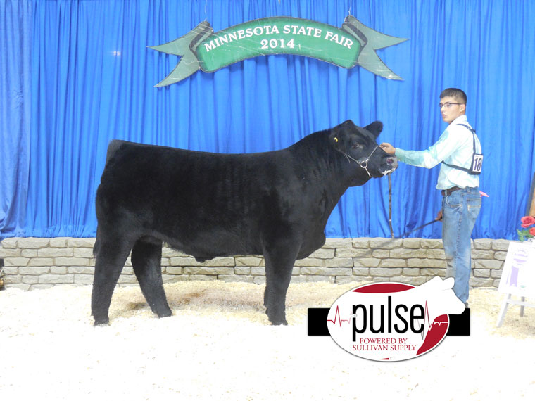 grand-limi-steer-mn