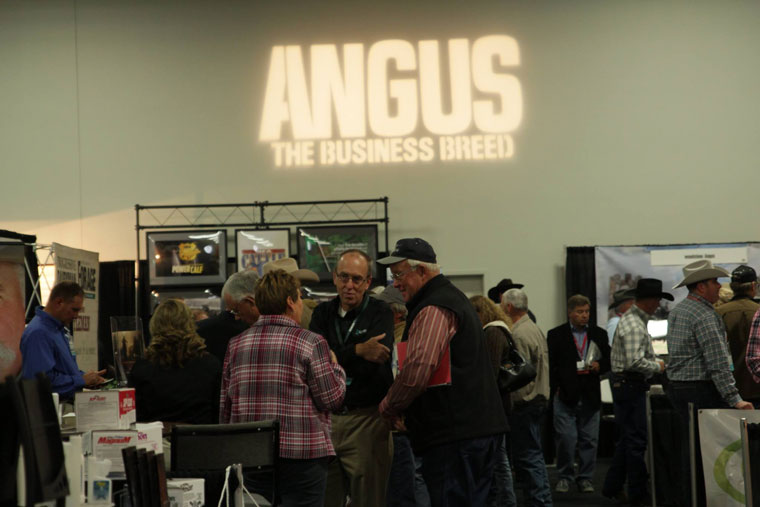 angus2