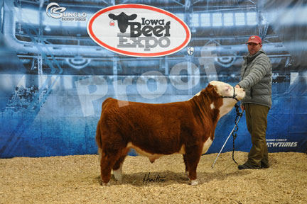 Iowa Beef Expo | Miniature Herefords Sale Results | The Pulse