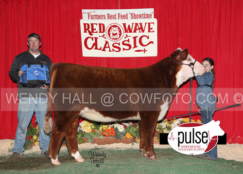SR-Res-Ch-Hereford-Heifer-Carly-Wheeler-WEB-IMAGE-ONLY