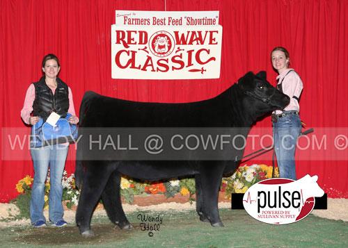 SR-Res-Maine-Heifer-Megan-Ashbrok-WEB-IMAGE-ONLY