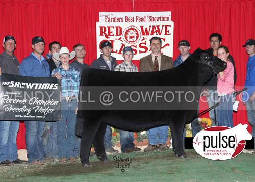 SR-Res-Supreme-Heifer-Taylor-Cardoza-WEB-IMAGE-ONLY