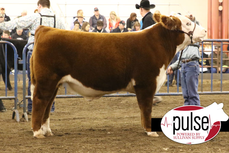 Z Bar H Cattle Illinois Beef E...