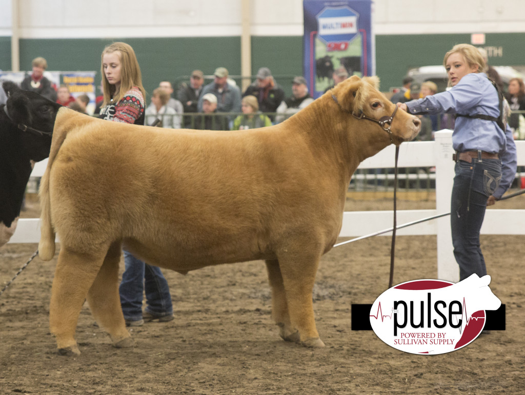 ncc champ mainetainer steer