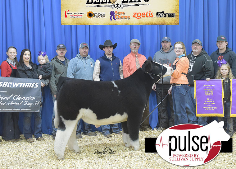 pulse_2016-kbe-supreme-champion-steer-ring-a_b-crossbred-exhibited-by-olivia-caldwell-ppw4482