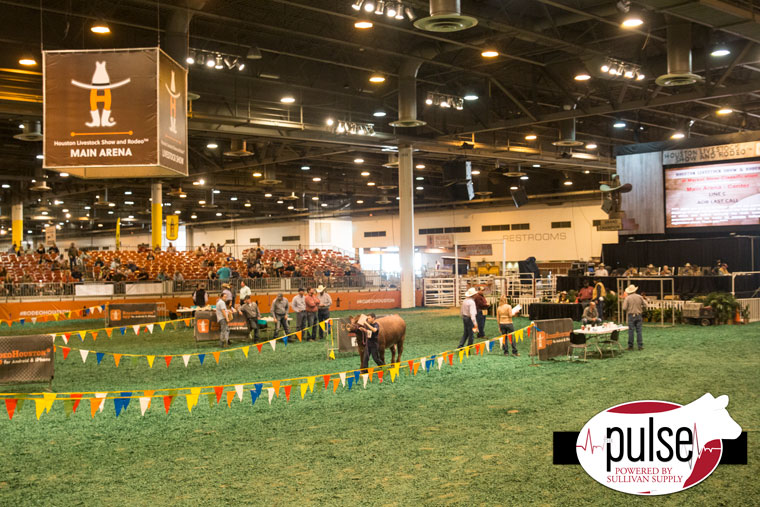 Houston Livestock Show On Tuesdays We Classify The Pulse