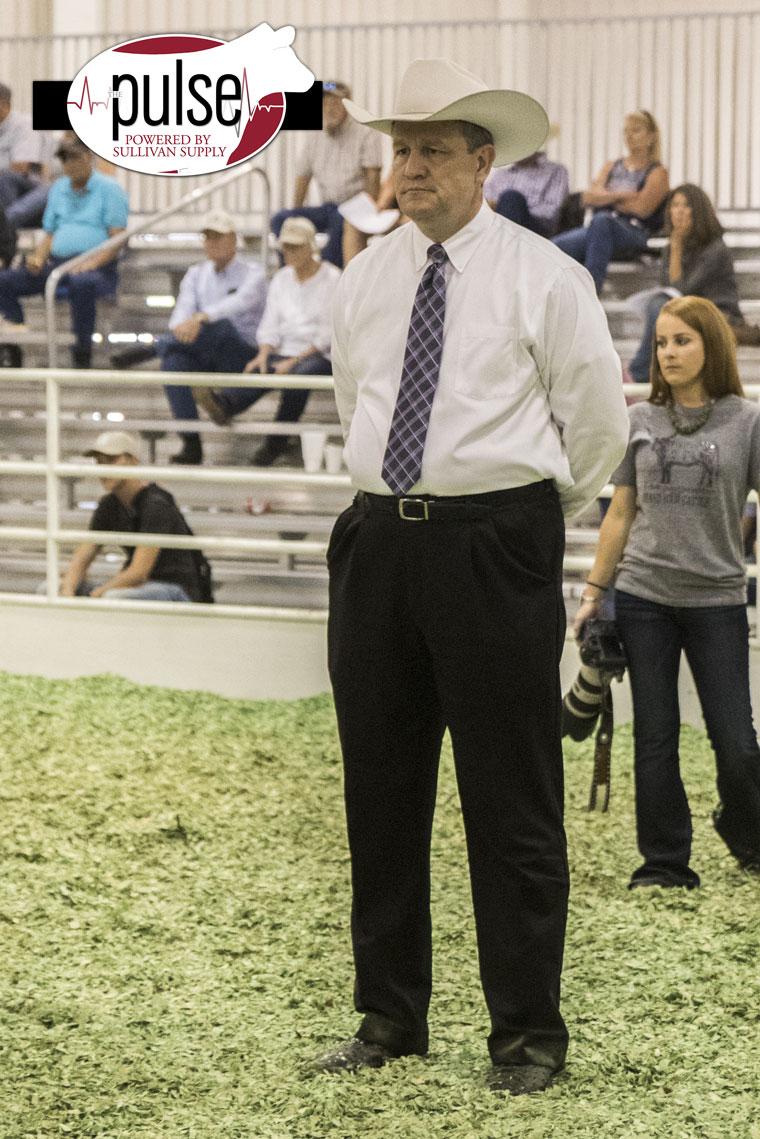 Kansas State Fair Heifer Show Candids The Pulse