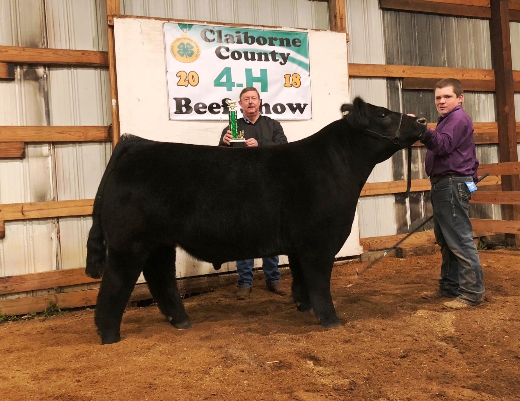 Claiborne County Tn Grand Champion Market Steer The Pulse
