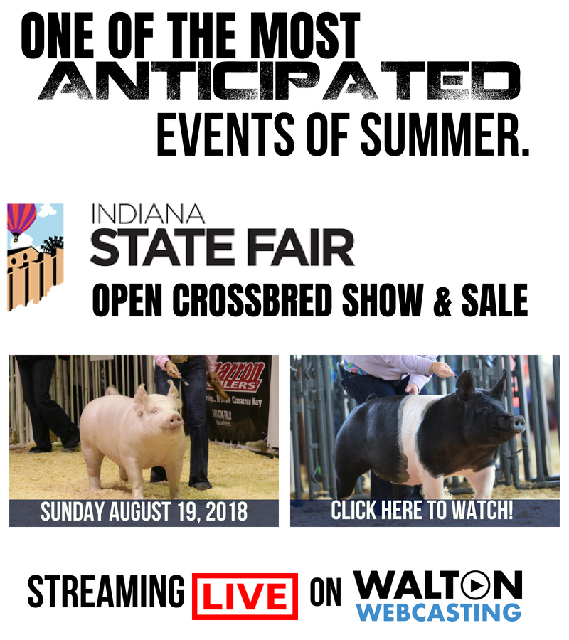 Indiana state fair open crossbred hog show live on walton webcasting indiana state fair open crossbred hog show live on walton webcasting junglespirit Gallery