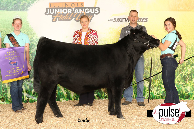 Illinois Junior Angus Field Day Bred Amp Owned Heifers