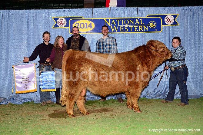 highland-res-bull