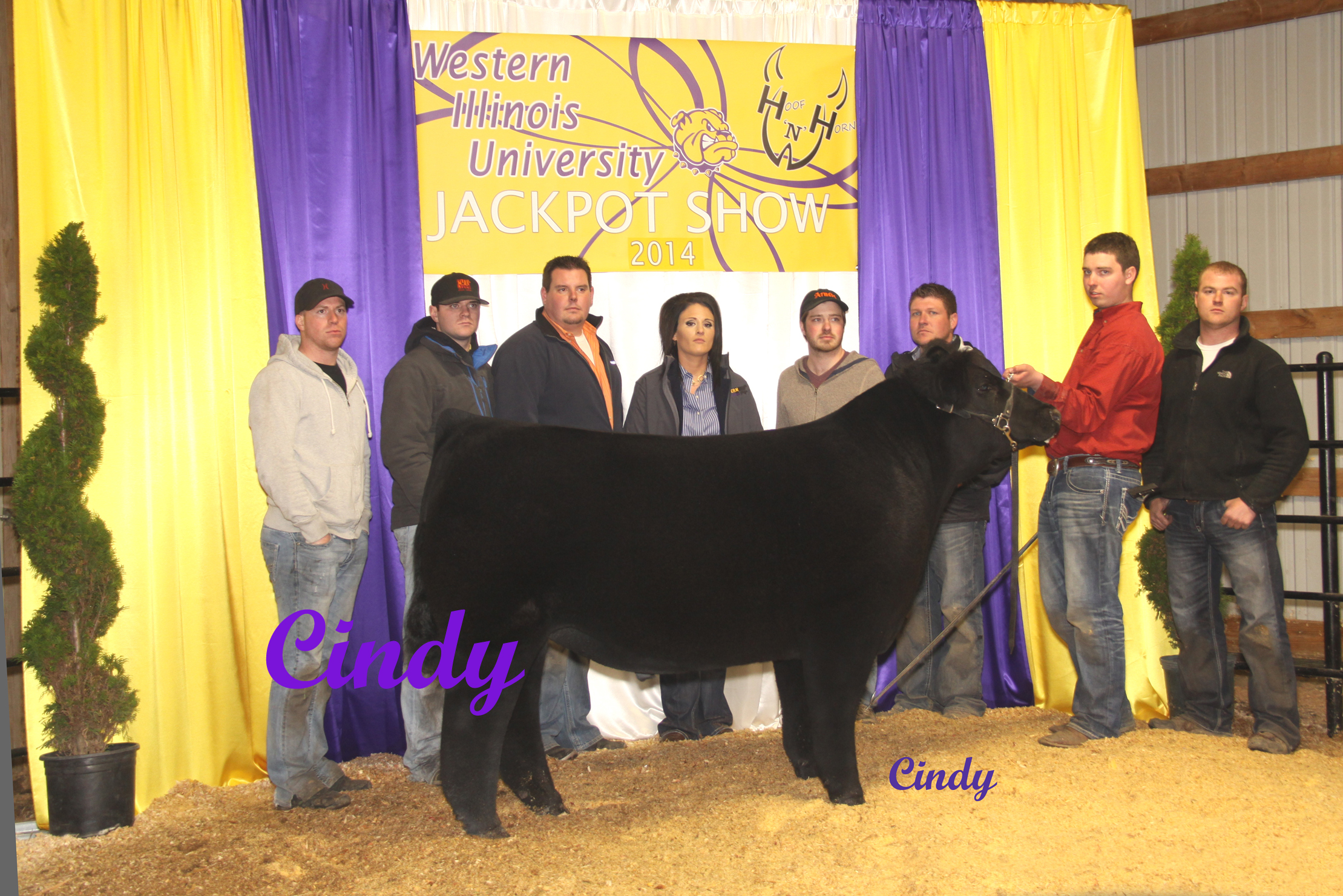 8 3rd OVERALL STEER ( RES CH XBRED) NELSON ENGLAND