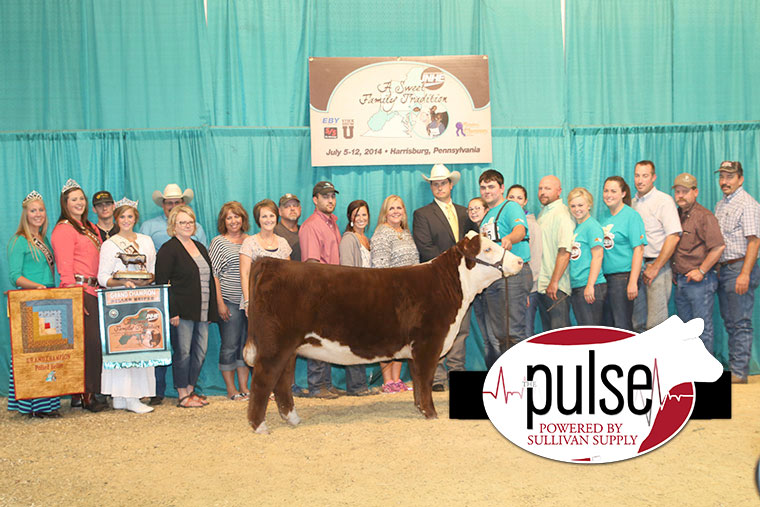 grand-polled