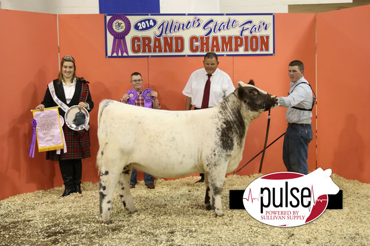 Reserve-Polled-Shorthorn-IL-Open