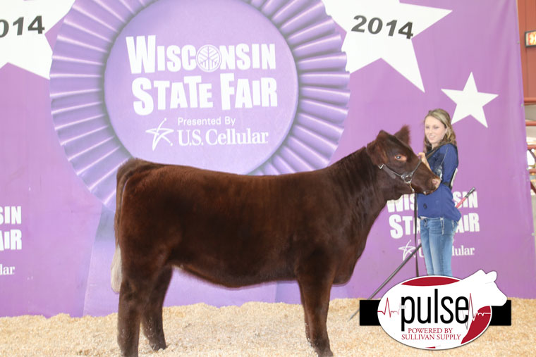 wis-res-shorthorn