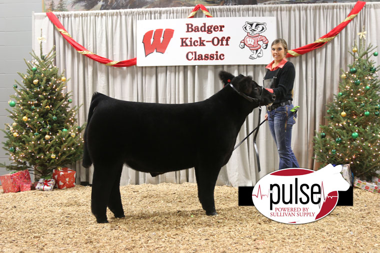res_maine_steer
