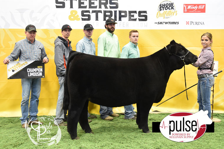 2016-MU-Steers_Stripes-Champion-Limousin-Heifer-Ring-A_B-exhibited-by-Madison-Ratliff-PPW5266