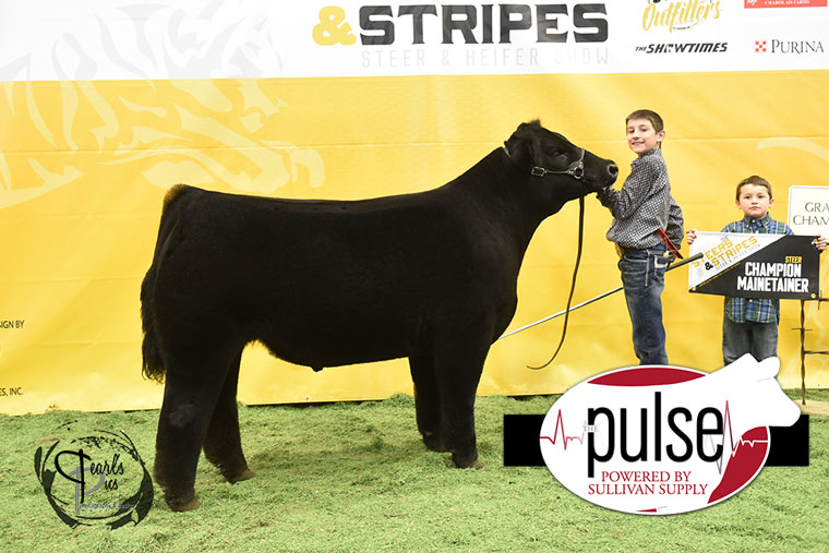 2016-MU-Steers_Stripes-Champion-Mainetainer-Steer-Ring-B-exhibited-by-Cole-Murphy-MO-PPW7256