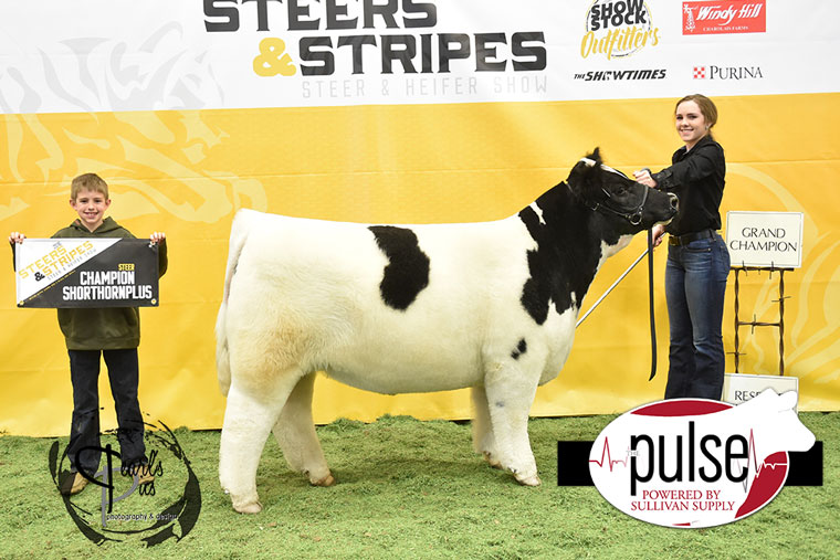 2016-MU-Steers_Stripes-Champion-Shorthorn-Plus-Ring-A-Res-Champ-Ring-B-exhibited-by-Ashlyn-Lackey-PPW7412