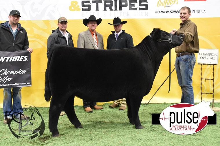 2016-MU-Steers_Stripes-Grand-Champion-Heifer-Ring-A_B-Champ-Angus-A_B-exhibited-by-Kenton-Lain-PPW6378