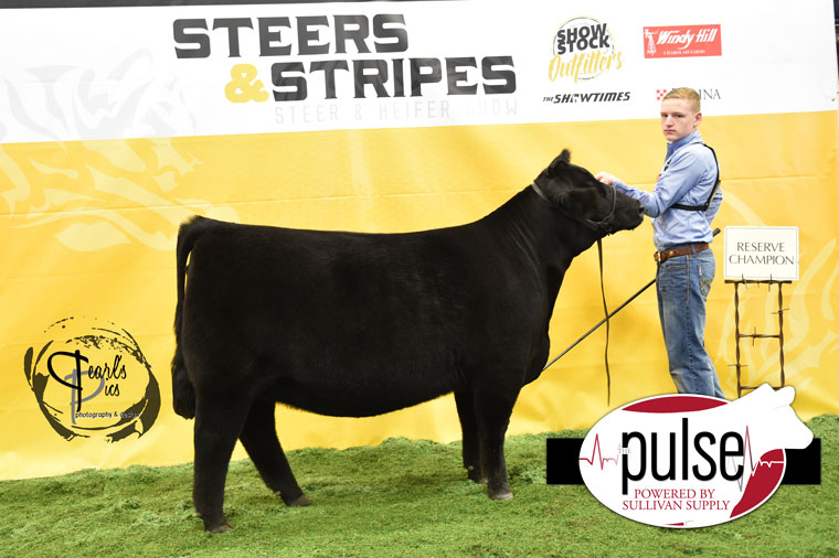 2016-MU-Steers_Stripes-Res-Champ-Angus-Heifer-Ring-A-exhibited-by-Jack-Henderson-PPW4738