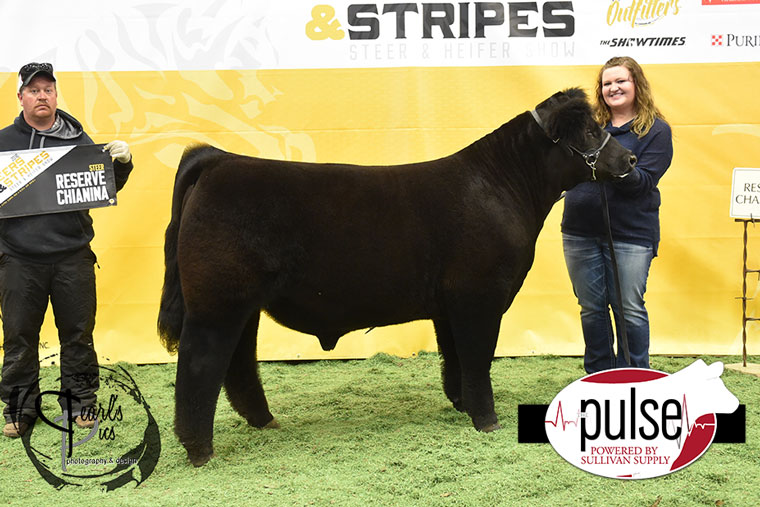 2016-MU-Steers_Stripes-Res-Champ-Chi-Steer-Ring-A-exhibited-by-kelsey-Bruns-PPW6933