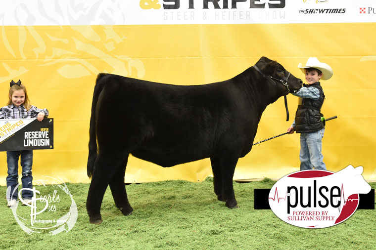 2016-MU-Steers_Stripes-Res-Champ-Limousin-Heifer-Ring-A-exhibited-by-Gage-Baker-PPW5305