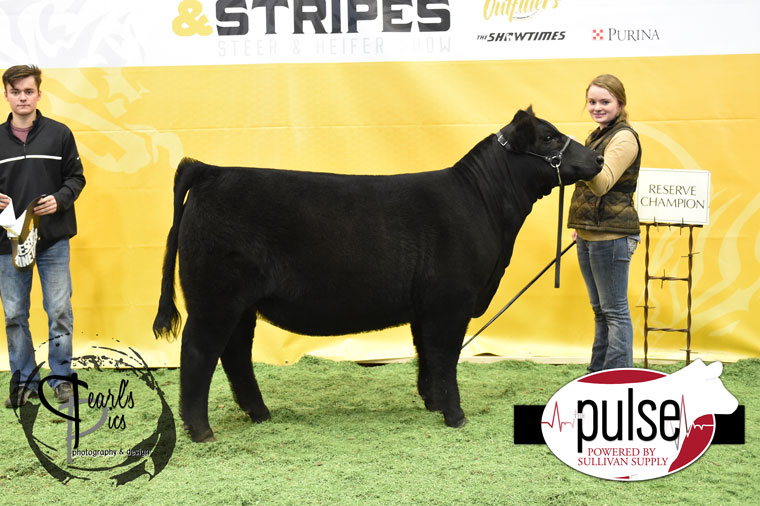 2016-MU-Steers_Stripes-Res-Champ-Mainetainer-Heifer-Ring-A-MO-Champ-Mainetainer-Ring-A-MO-Res-Maintainer-Ring-B-exhibited-by-Cassidy-Barker-PPW5446