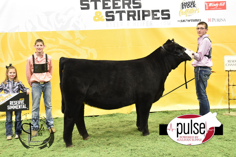 2016-MU-Steers_Stripes-Res-Champ-Simmental-Heifer-Ring-A-exhibited-by-Connor-Travis-PPW5969