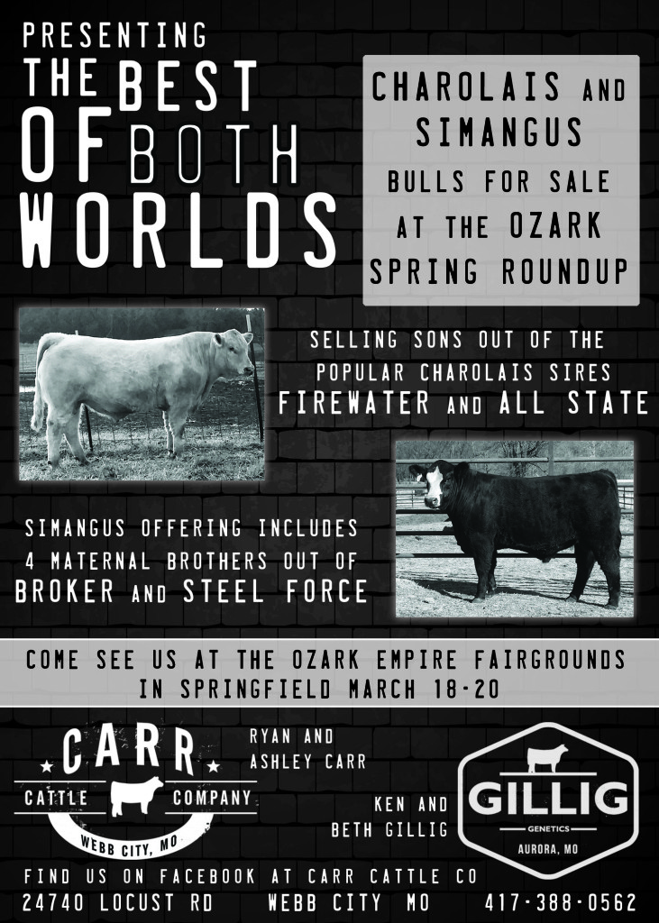 Carr Cattle and Gillig Ad