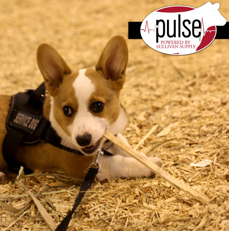 pup_IMG_7383