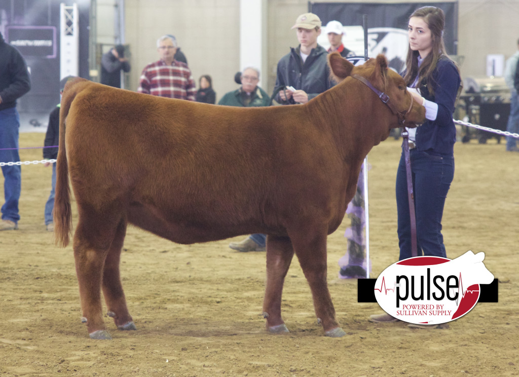 res red angus