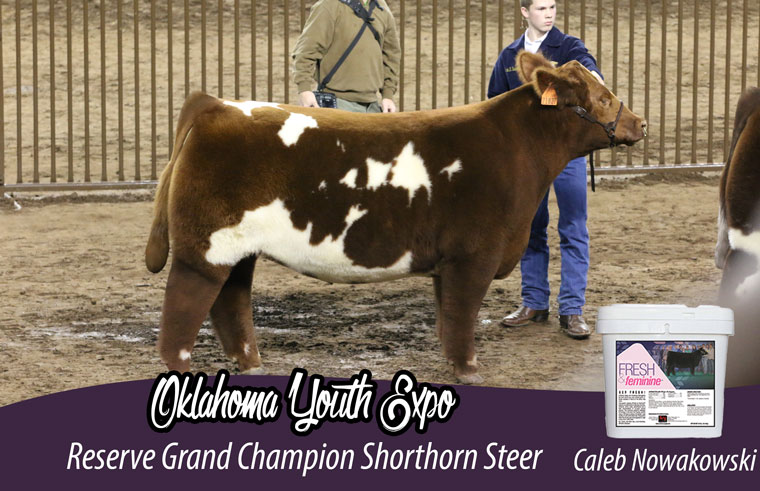 res_shorthorn_steer_ff_pic_official