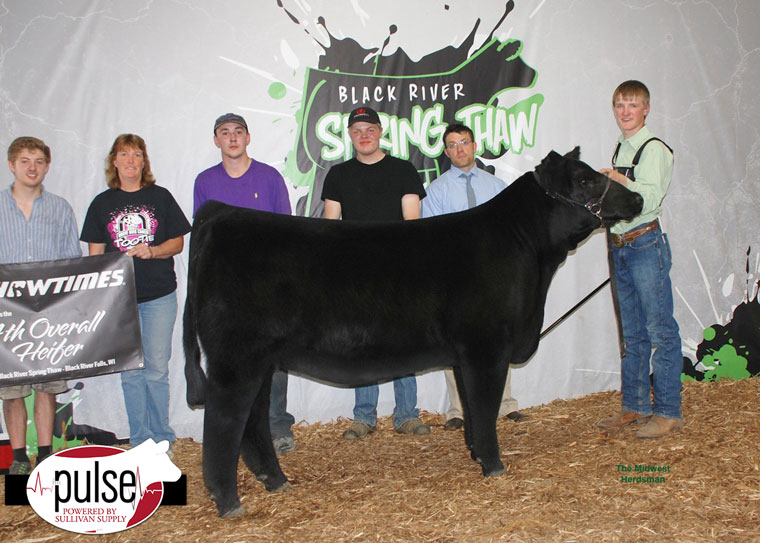 thumbnail_Champion-Mainetainer-and-Fourth-Overall-Heifer
