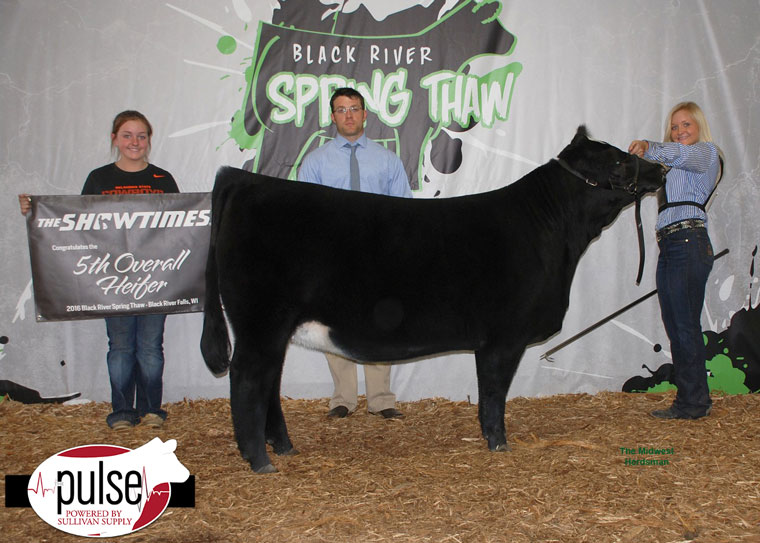 thumbnail_Champion-Percentage-Simmental-and-Fifth-Overll-Heifer-(two)