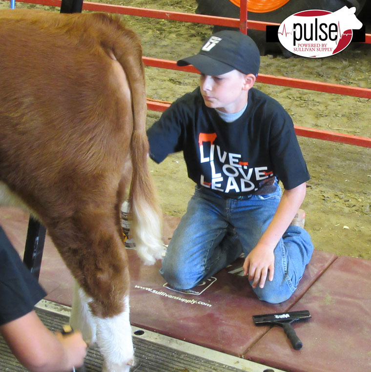 Cody-Ramsey-fitting-a-hind-leg-in-the-Fitting-Contest