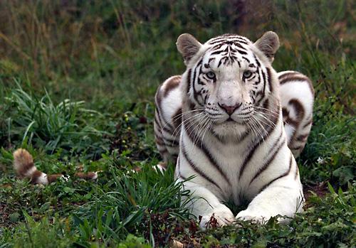 National_Tiger_Sanctuary_(007)