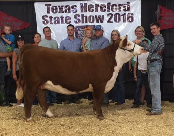 TX Herf Preview Ch Horned