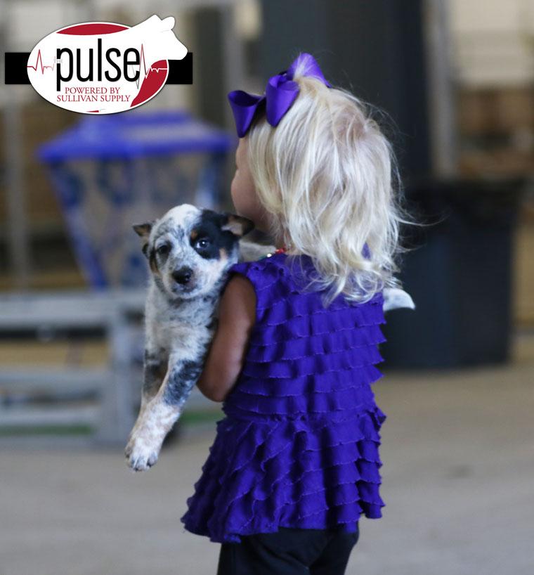 puppy_AW2A2062