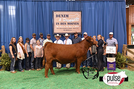 2016-AJSA-3rd-Overall-Owned-Percentage-Heifer_Champion-Division-5-exhibited-by-Cagney-Effling-PPW4107