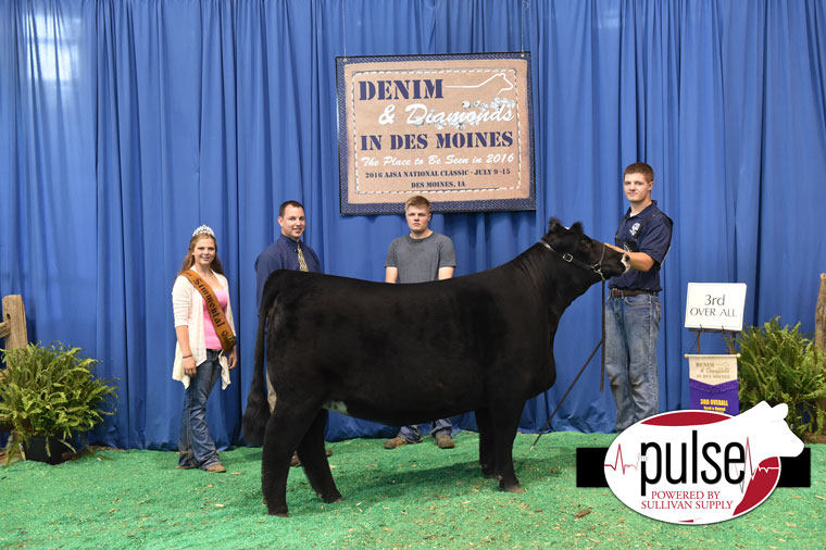 2016-AJSA-3rd-Overall-Percentage-Bred_Owned-Heifer-exhibited-by-Jorli-Hauge-PPW1714