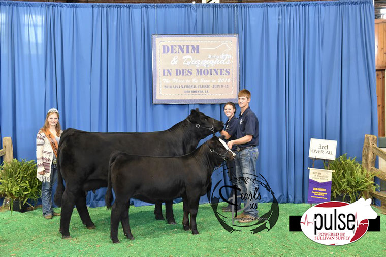 2016-AJSA-3rd-Overall-Purebred-Cow-Calf-Pair-exhibited-by-Leah-Scholz-PPW4903