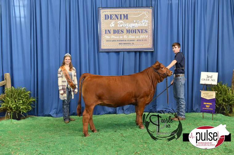 2016-AJSA-3rd-Overall-Simbrah-Heifer-exhibited-by-Zachary-Mills-PPW4651