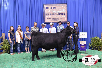 2016-AJSA-4th-Overall-Owned-Percentage-Heifer-exhibited-by-Elizabeth-Heaton-PPW4139