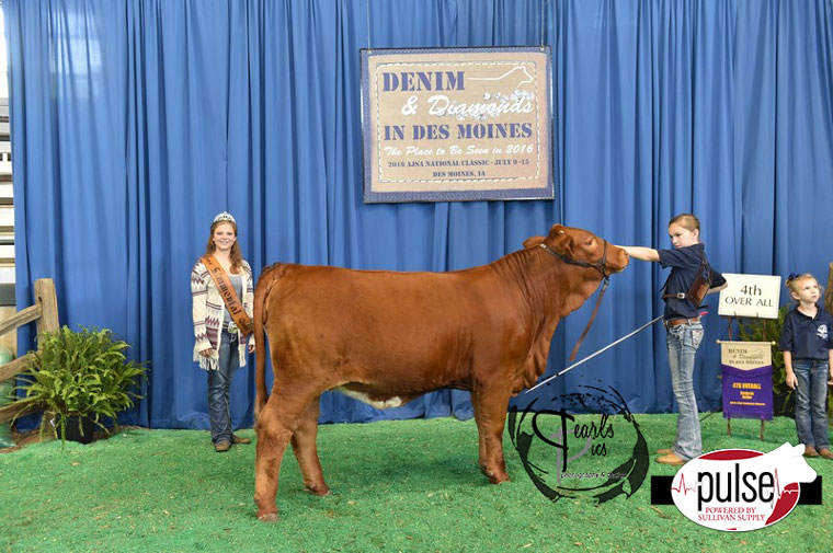 2016-AJSA-4th-Overall-Simbrah-Heifer-exhibited-by-Ryleigh-Whitaker-PPW4676