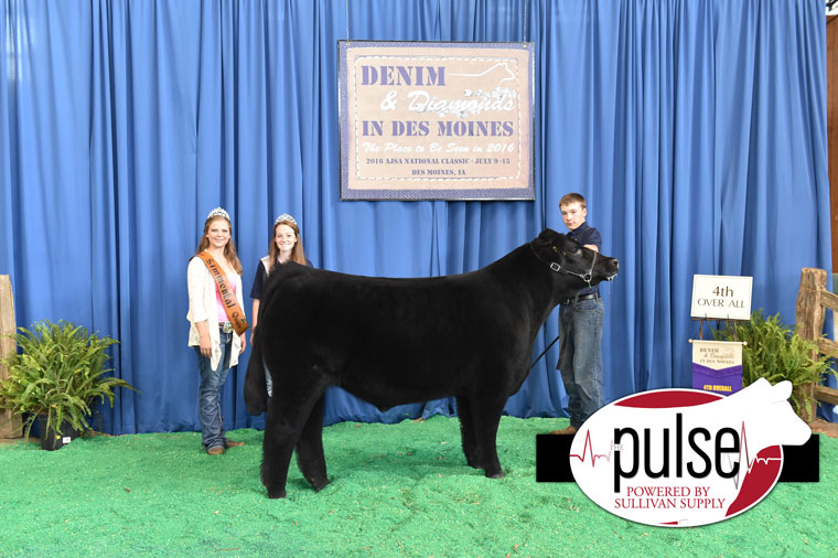 2016-AJSA-4th-Overall-Steer-exhibited-by-Dylan-Lunning-PPW9687
