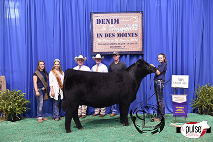 2016-AJSA-5th-Overall-Owned-Percentage-Heifer-exhibited-by-Sara-Sullivan-PPW4174