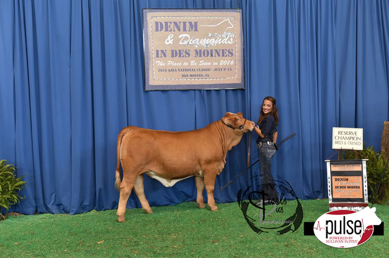 2016-AJSA-5th-Overall-Res-Champ-Bred-Owned-Simbrah-Heifer-exhibited-by-Hope-Onstot-PPW5061